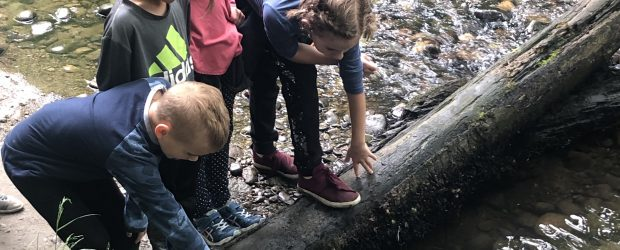 Thank you Streamkeepers and Fisheries Canada!  Our primary students had an awesome time learning about coho salmon and having the chance to release thousands of fingerlings!!!